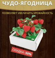 купить цель проекта по выращиванию клубники