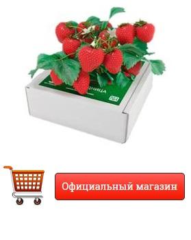 рассада клубники купить в москве недорого