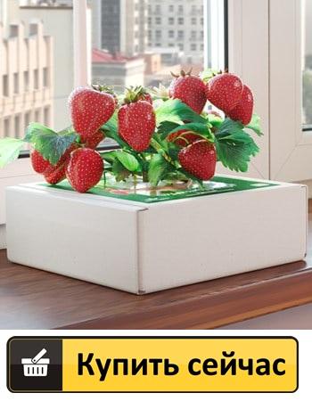 где в Ровно купить ягодницу клубники